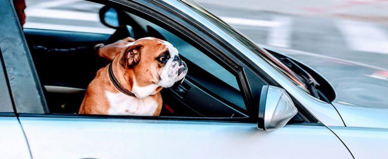 carros usados medellin foto mascota carro